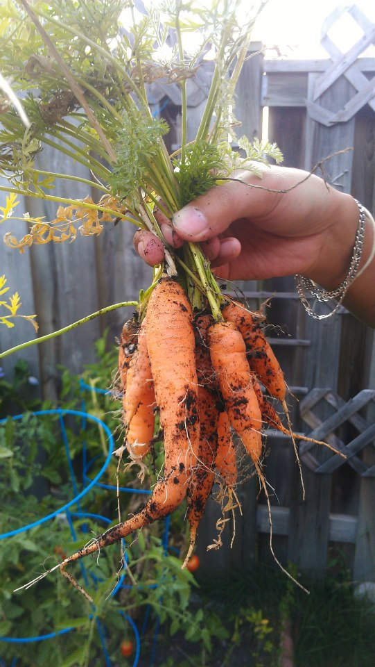 Annette tried growing carrots in planters and the results were so minimal that we decided to try something else instead.