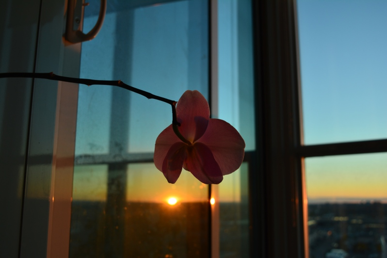 I'm not actually a gardener. This orchid is currently the only thing I've been able to grow. However, I do intend on becoming a gardener if that counts.